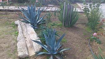 Horta e jardim