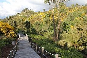Natureza Local