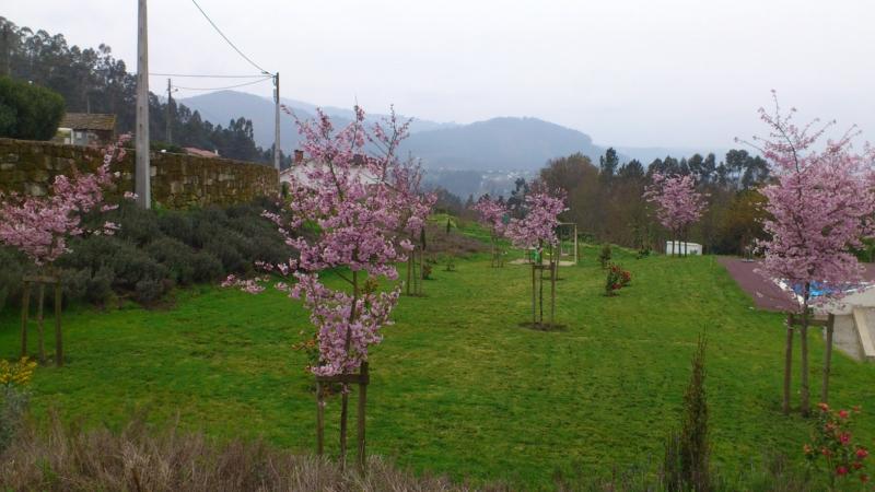 horta e jardim juntos:Galeria